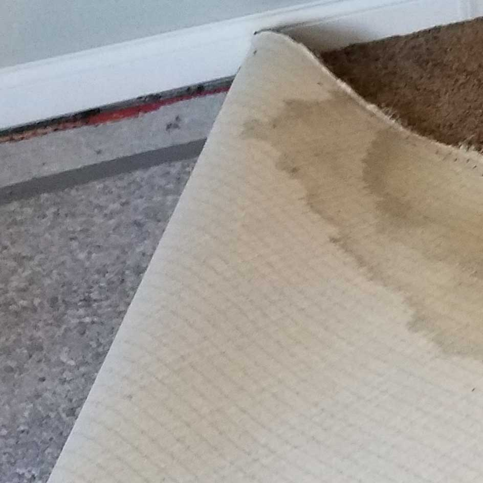carpet odor removal
